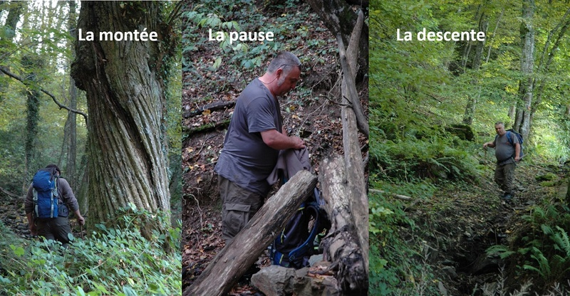 Flore Carbonifère des Alpes Françaises part 1 - Page 4 Chacha10