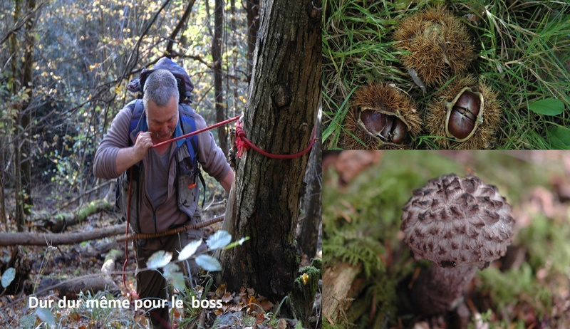 Flore Carbonifère des Alpes Françaises part 1 - Page 4 Sortie10