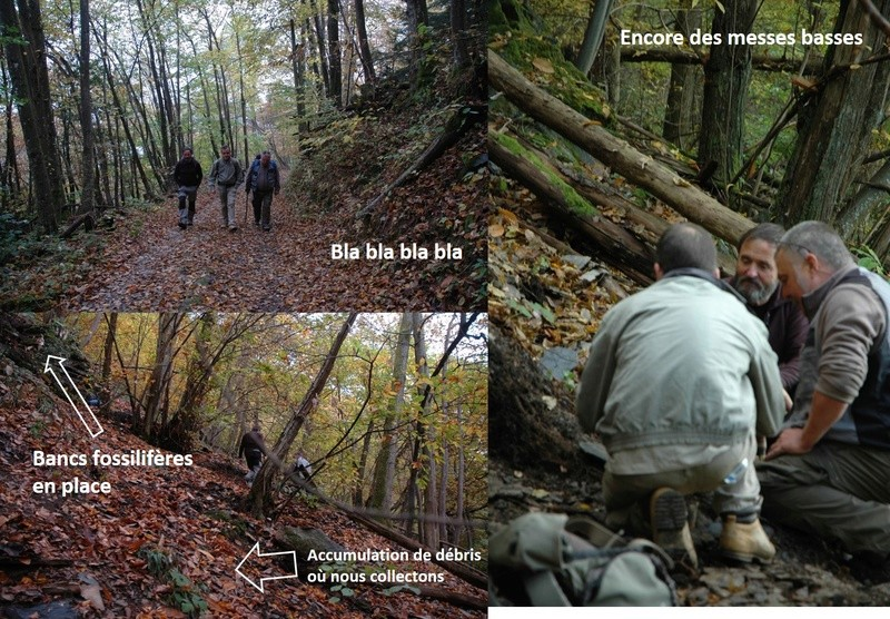 Flore Carbonifère des Alpes Françaises part 1 - Page 4 Sortie11