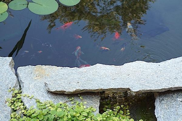 Bassin extérieur avec voiles de chine - Page 6 Dsc01818