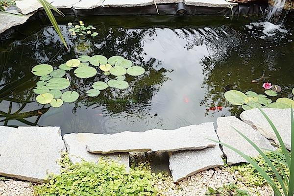 Bassin extérieur avec voiles de chine - Page 6 Dsc01823