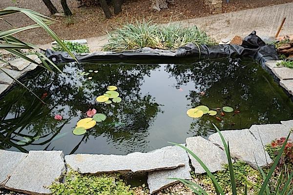 Bassin extérieur avec voiles de chine - Page 6 Dsc02712