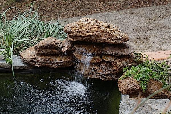 Bassin extérieur avec voiles de chine - Page 6 Dsc02713