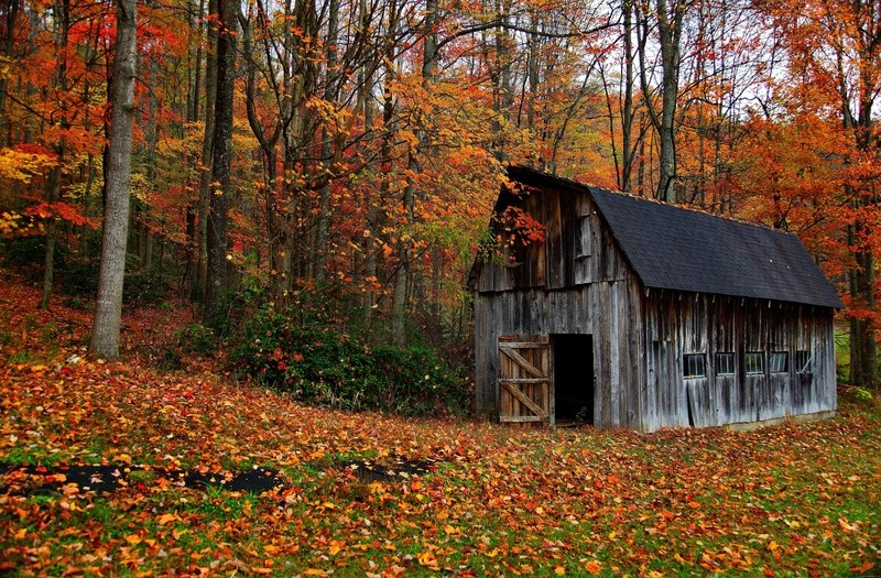 Automne - Page 2 Wall-110