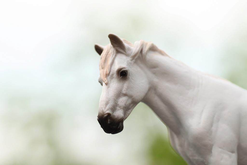 my Deborah McDermott's horses Camarg10
