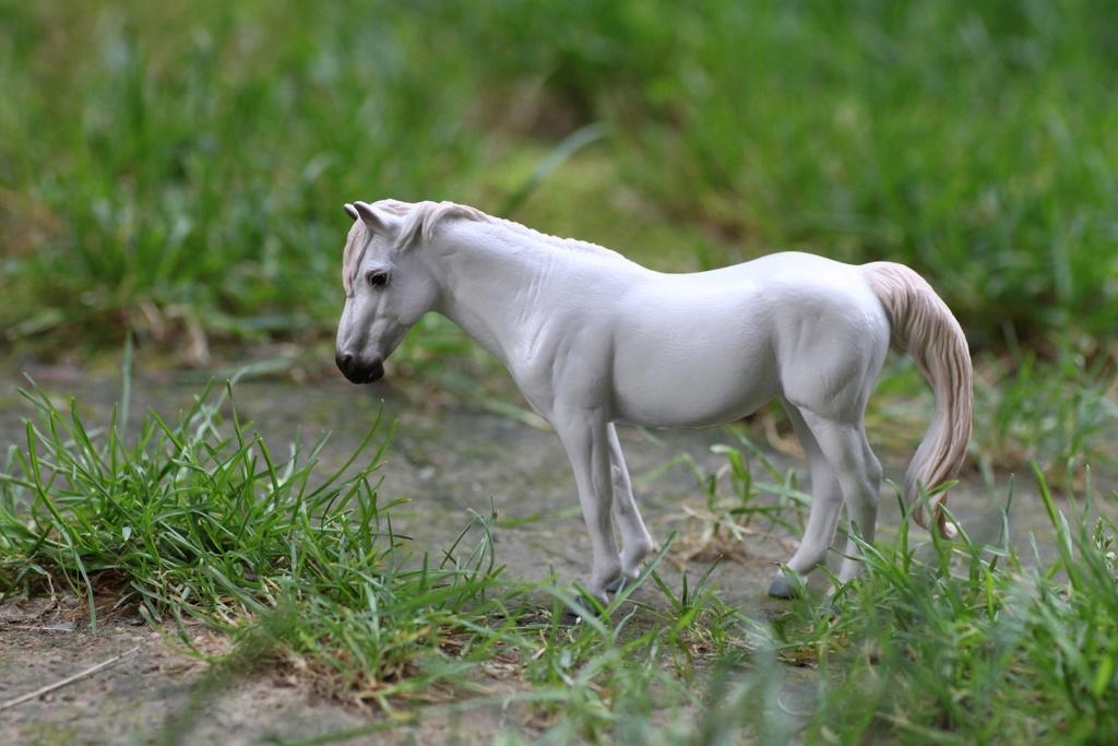 my Deborah McDermott's horses Camarg11