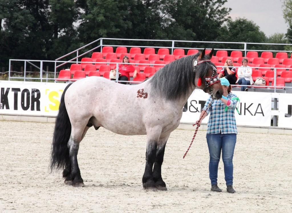my Deborah McDermott's horses Norik10