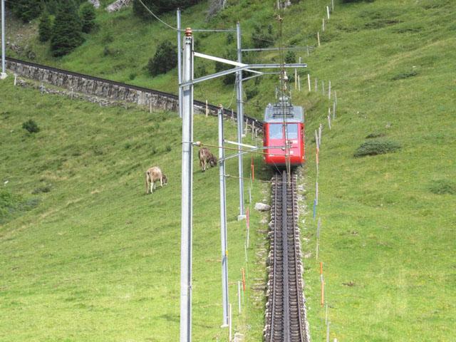"""Notre """"Grand Tour de Suisse"""" ... Lucerne-Pilatus Img_3927"""