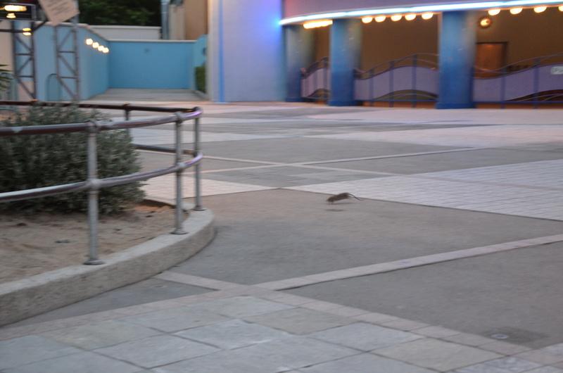Rat aperçu en terrasse du Colonel Hathi's Pizza Outpost - Page 2 Dsc_0010