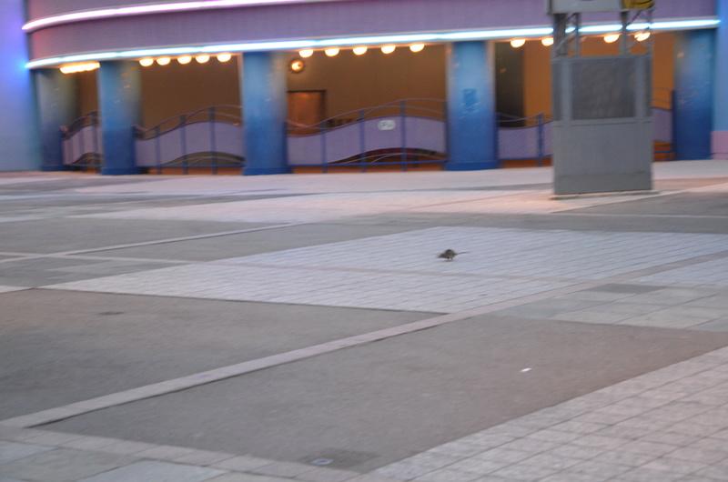 Rat aperçu en terrasse du Colonel Hathi's Pizza Outpost - Page 2 Dsc_0011