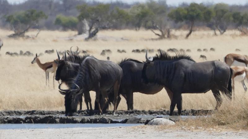 Namibie Août 2016 P1090611