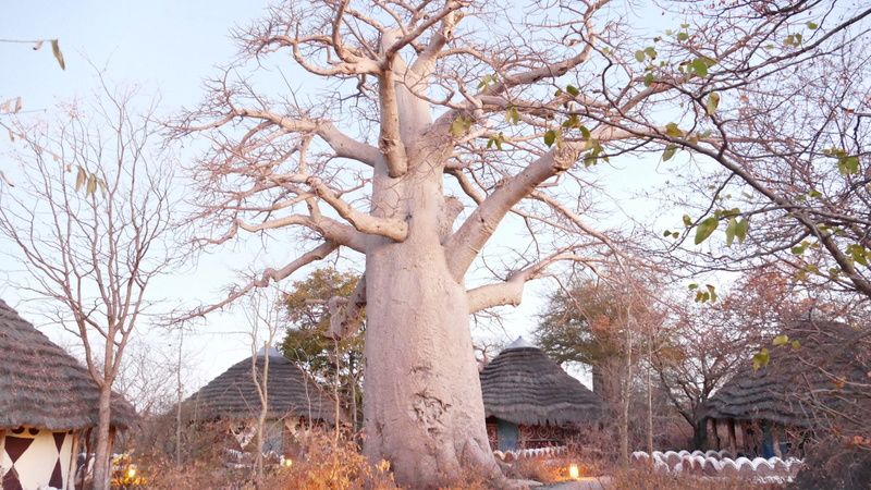 Namibie Août 2016 P1090713