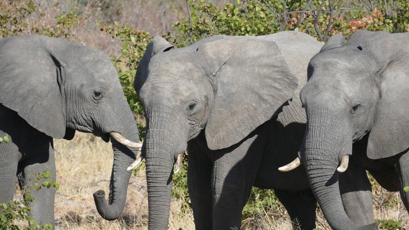 Namibie Août 2016 P1090714