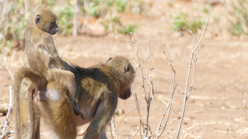 Namibie Août 2016 P1100014