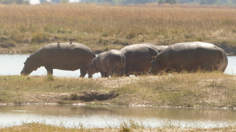 Namibie Août 2016 P1100118