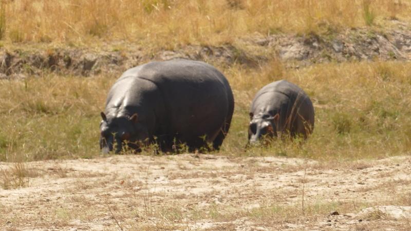 Namibie Août 2016 P1100119