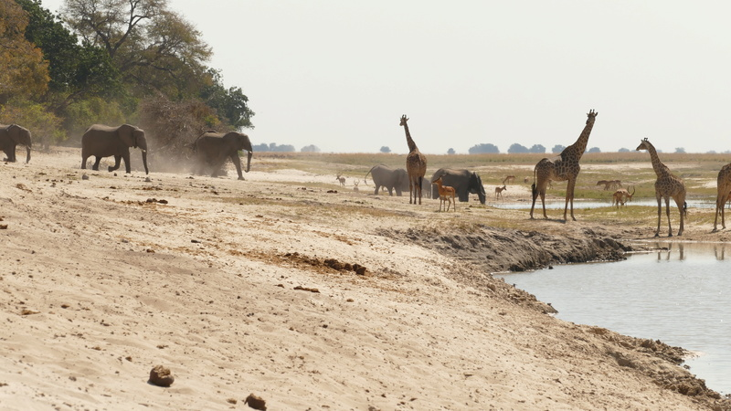 Namibie Août 2016 P1100212