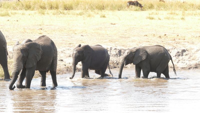 Namibie Août 2016 P1100214
