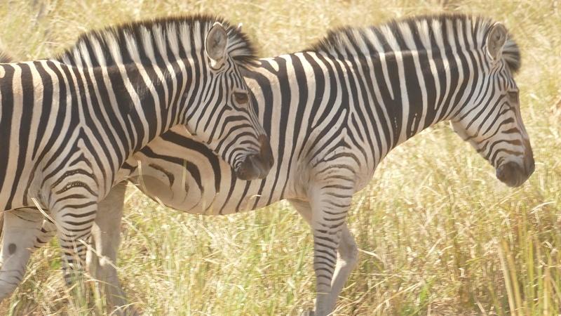 Namibie Août 2016 P1100217