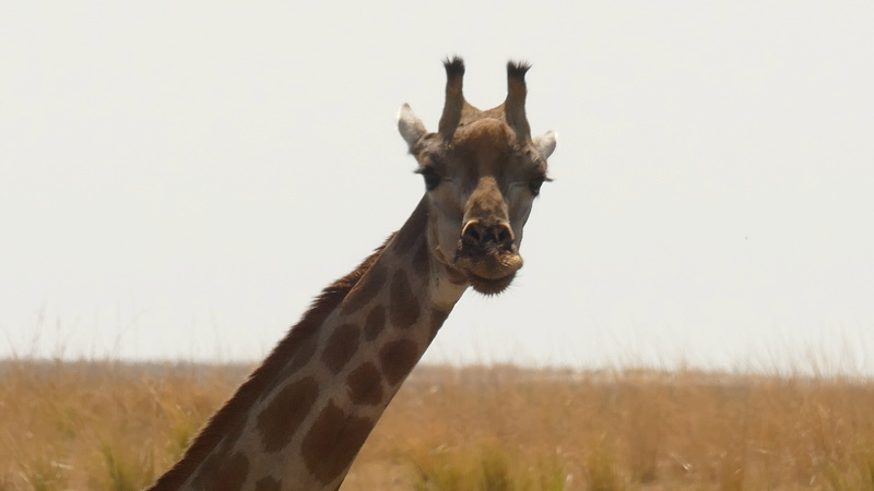 Namibie Août 2016 P1100218