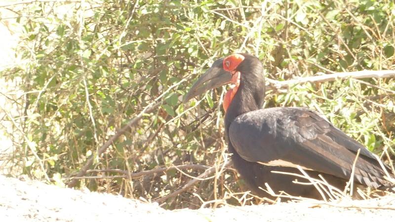 Namibie Août 2016 P1100220
