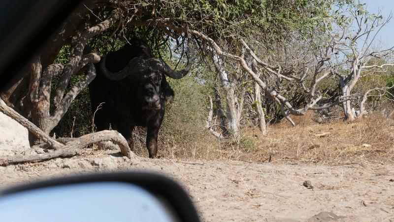 Namibie Août 2016 P1100313