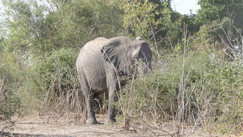 Namibie Août 2016 P1100314