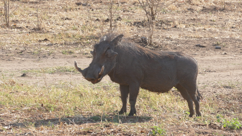 Namibie Août 2016 P1100315