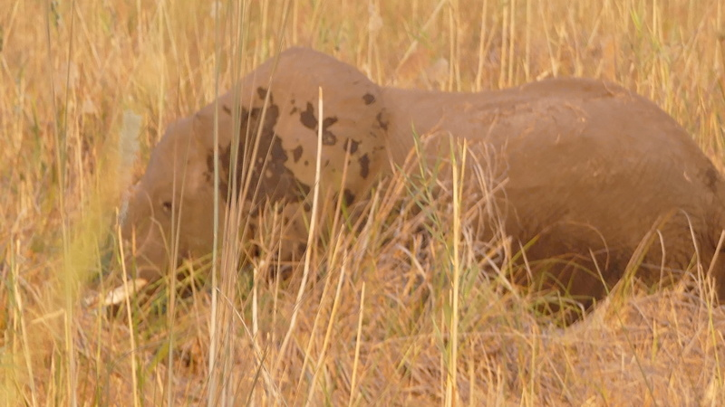 Namibie Août 2016 P1100512
