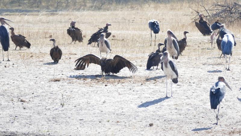 Namibie Août 2016 P1100515