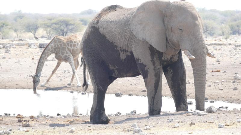 Namibie Août 2016 P1100813