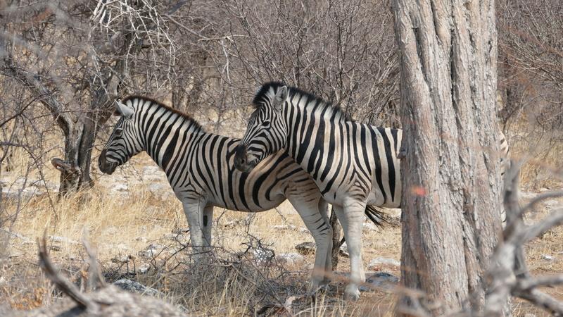 Namibie Août 2016 P1100815