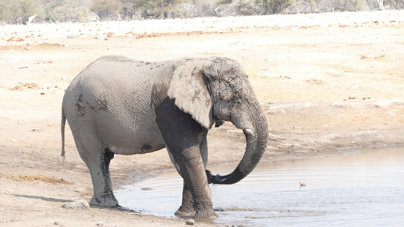 Namibie Août 2016 P1110013