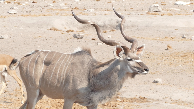 Namibie Août 2016 P1110014