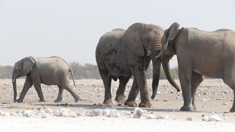 Namibie Août 2016 P1110016
