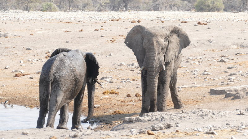Namibie Août 2016 P1110017
