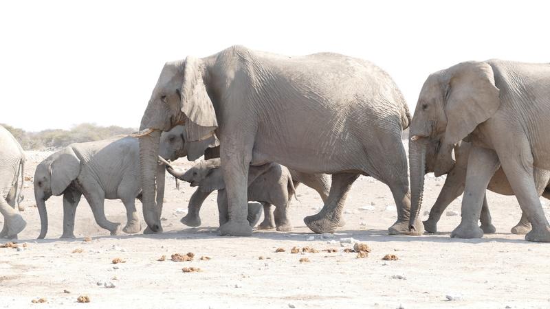 Namibie Août 2016 P1110018