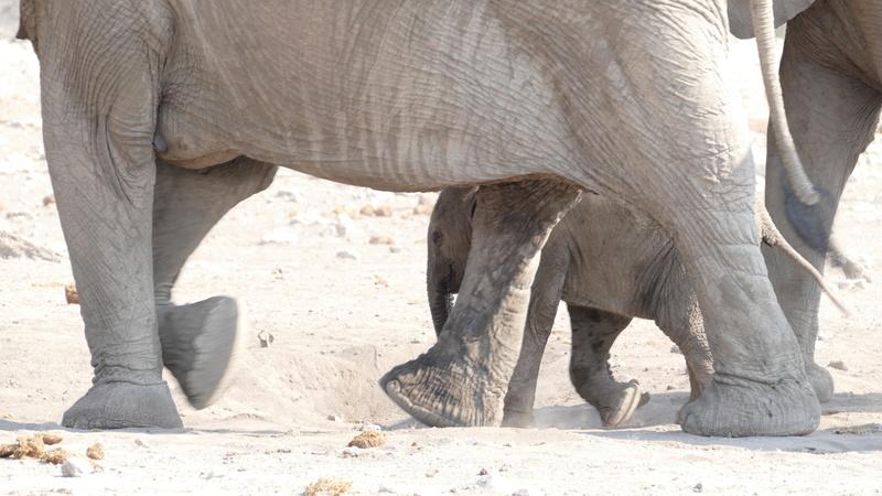 Namibie Août 2016 P1110019