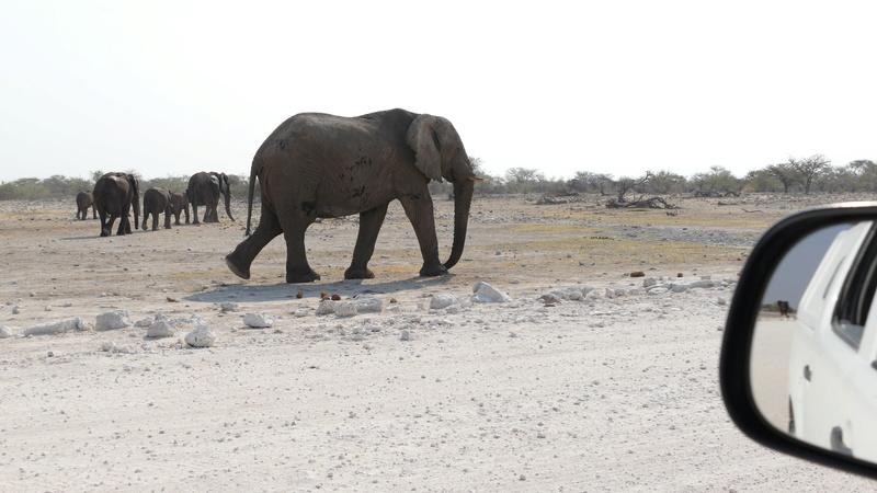 Namibie Août 2016 P1110023