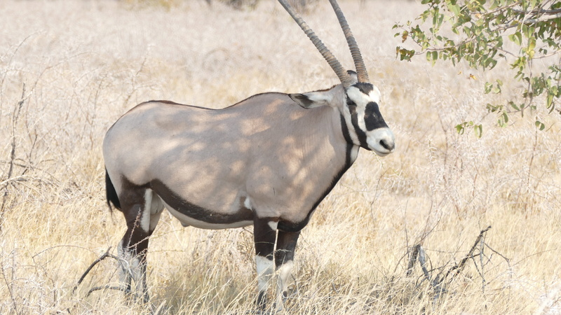 Namibie Août 2016 P1110024