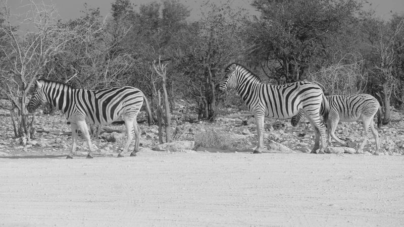 Namibie Août 2016 P1110025