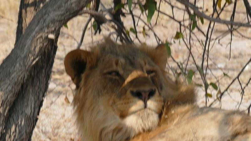 Namibie Août 2016 P1110110