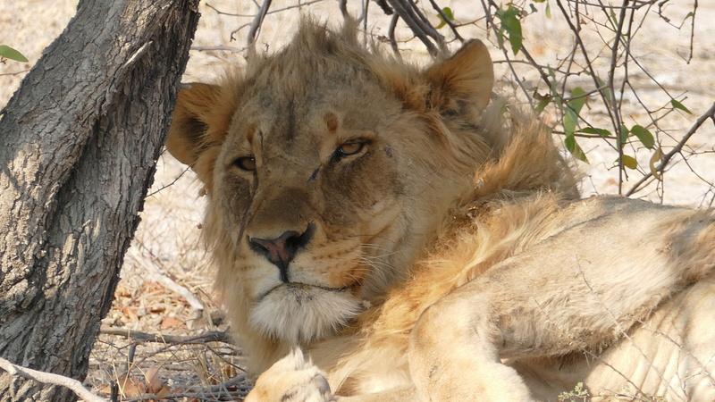Namibie Août 2016 P1110112