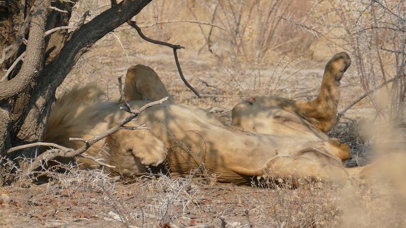Namibie Août 2016 P1110113
