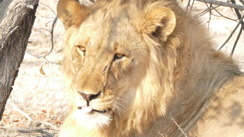 Namibie Août 2016 P1110117