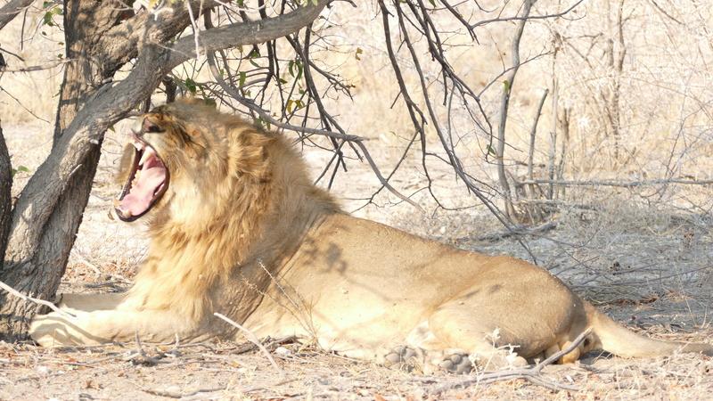 Namibie Août 2016 P1110119