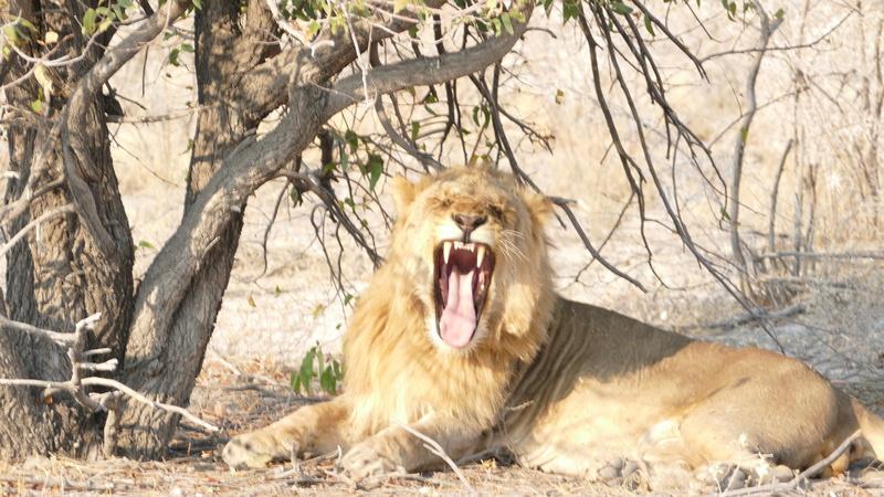 Namibie Août 2016 P1110121