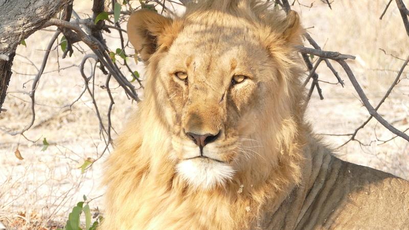 Namibie Août 2016 P1110122