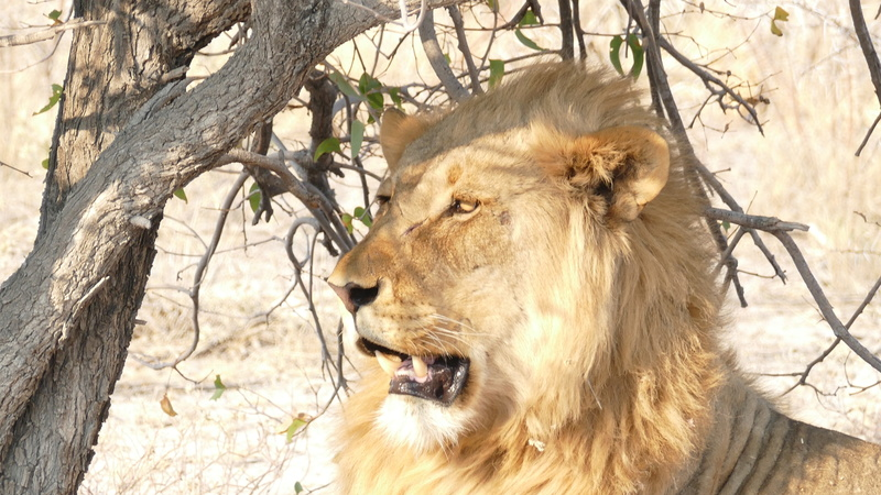 Namibie Août 2016 P1110123