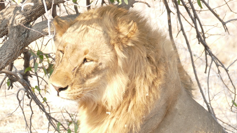 Namibie Août 2016 P1110124